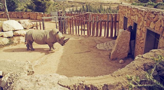 Holy Zoo